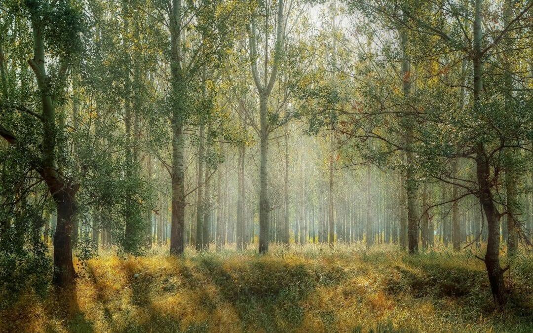 För mycket energi stannar i skogen